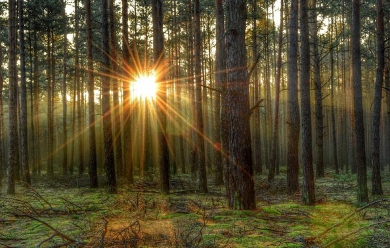 Чудо, которое случилось однажды на опушке леса
